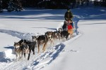 dog-sled-278875_960_720