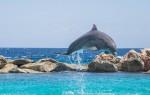 dolphin-906182_960_720