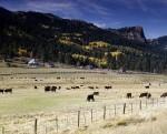 ranch-720045_960_720