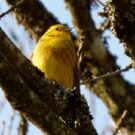Alabama, the Yellowhammer State